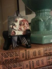 Spaniel, Stephanie Macera pet portrait