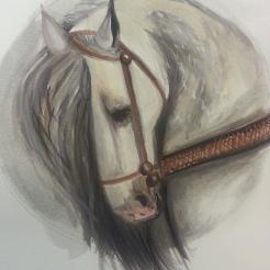 Warhorse watercolor, Stephanie Macera