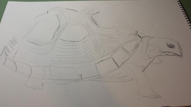 S. Macera Mertyle Turtle sketch