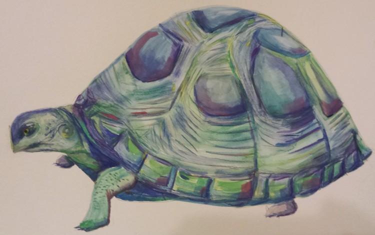 S. Macera Mertyle Turtle