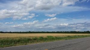 Summer fields of Kansas